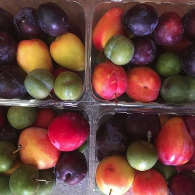 Roxburgh Fruit Trail